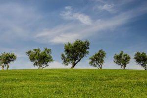 Monter son cabinet de conseil en développement durable